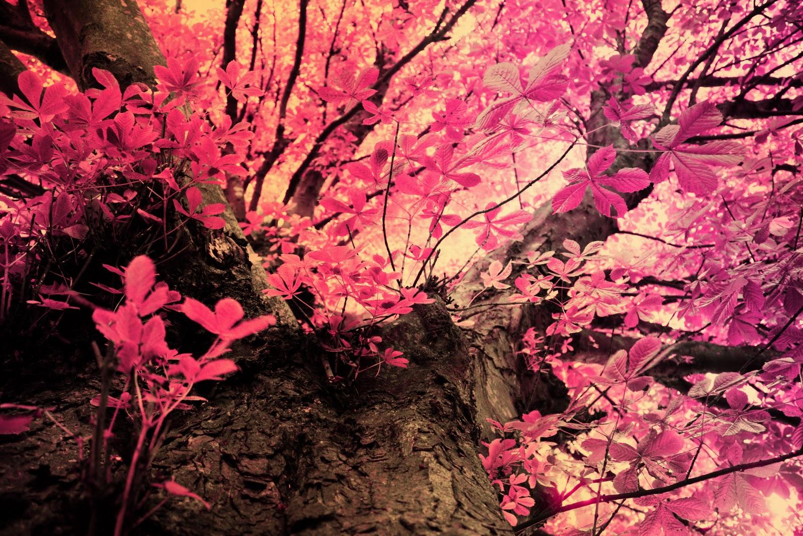 Pink mossy oak wallpaper fashionable pink leaves