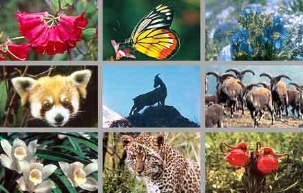 La Flora y Fauna.