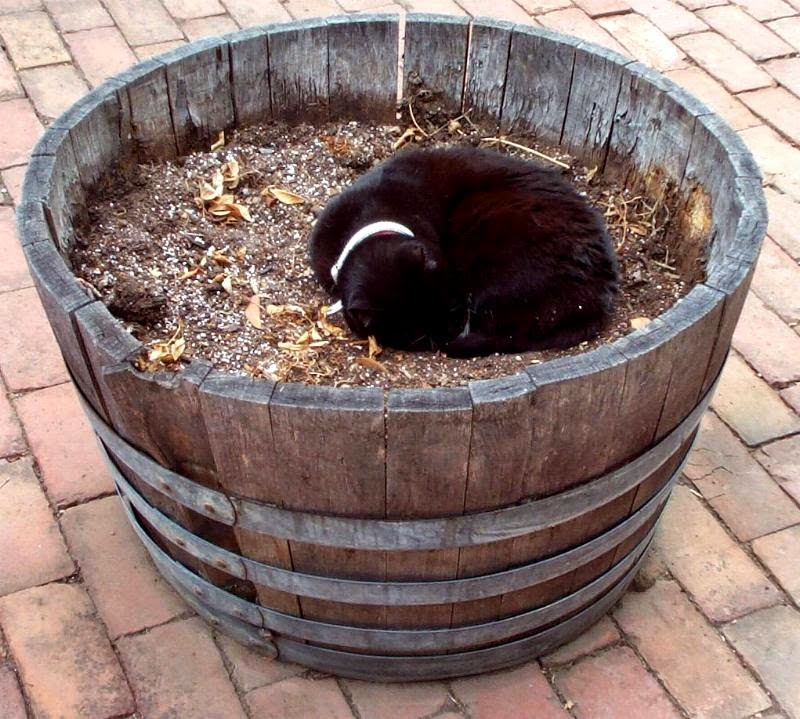 Astra curled up asleep in a large tub