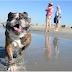 Η πρώτη παραλία για σκύλους... στο Λος Άντζελες!