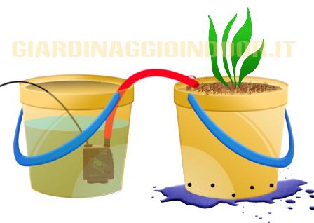 Basilico idroponica for Sistema irrigazione fai da te