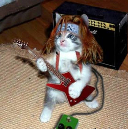 cat and guitar gif