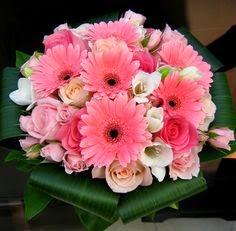 pink gerber daisy bouquet