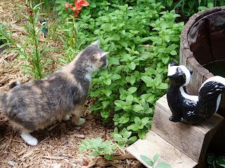 cat goes for snake