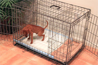 dog apartment crate for potty training dog breeds picture