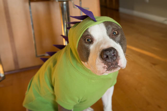 Two Pitties in the City: DoggyStyle: Making Dinosaur Dog ...