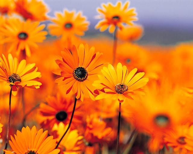 Hình ảnh hoa đẹp 02