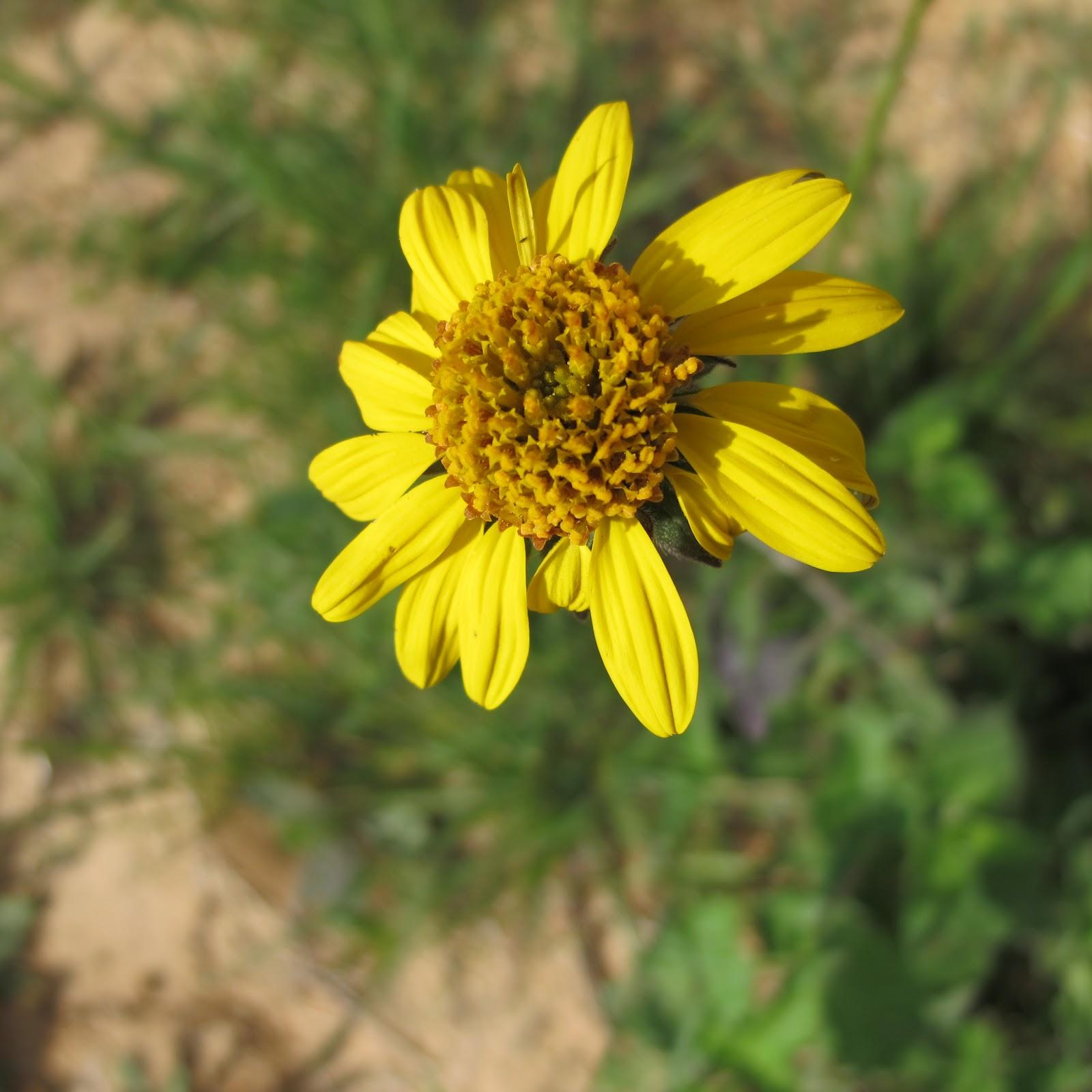 Texas Wildflowers Trail Star Of Texas Bed Breakfast
