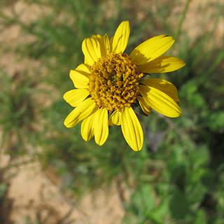 yellow wild flower in field
