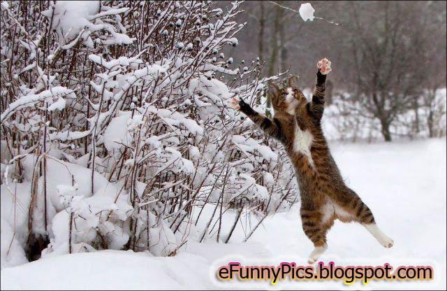 Snowball Hunt