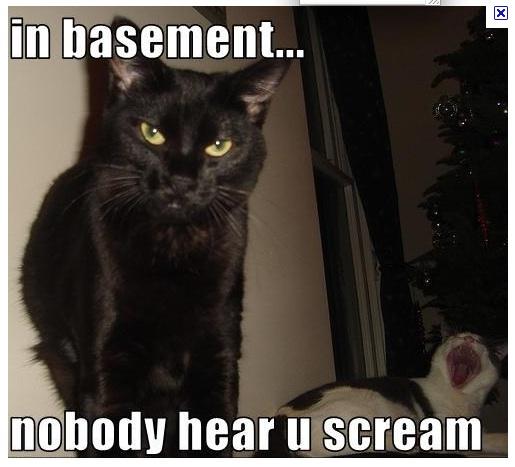 basement cat basement cat writes a novel
