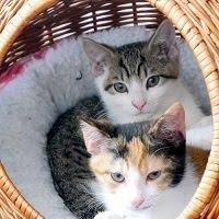 Lily & Nino