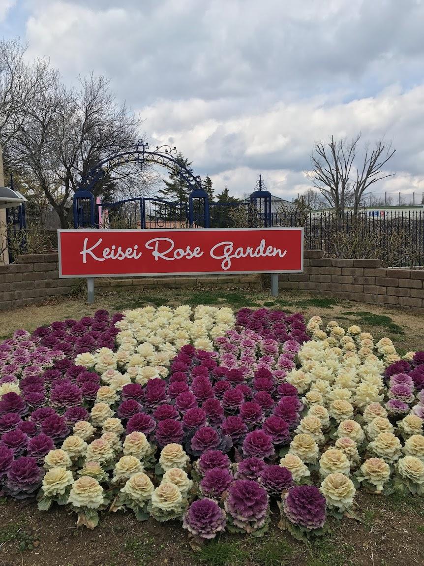 京成バラ園の春