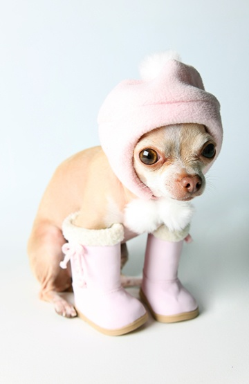 Best Dog Boots For Puppies