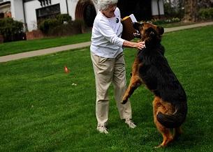 Nhảy bổ vào chủ nuôi. Hãy dạy cho chó của bạn học cách kiểm soát sự phấn khích của mình.
