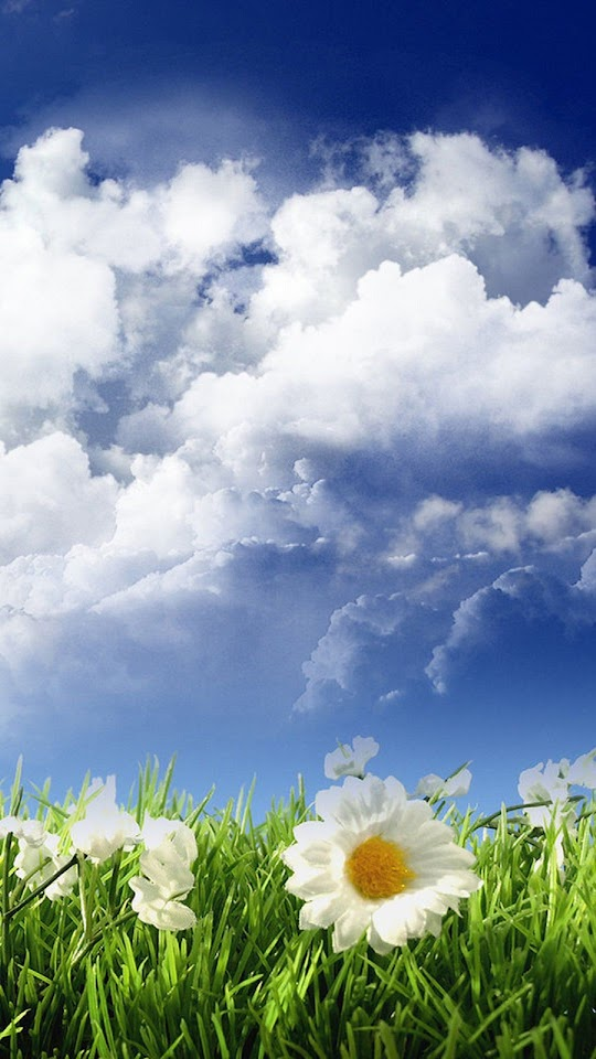 HD White Flowers Green Field Clouds  Galaxy Note HD Wallpaper