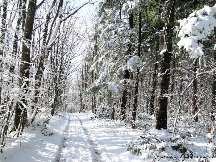 Le jardin de sylvie en photos ballade dans la neige - Les jardins de la lagune oualidia sylvie ...