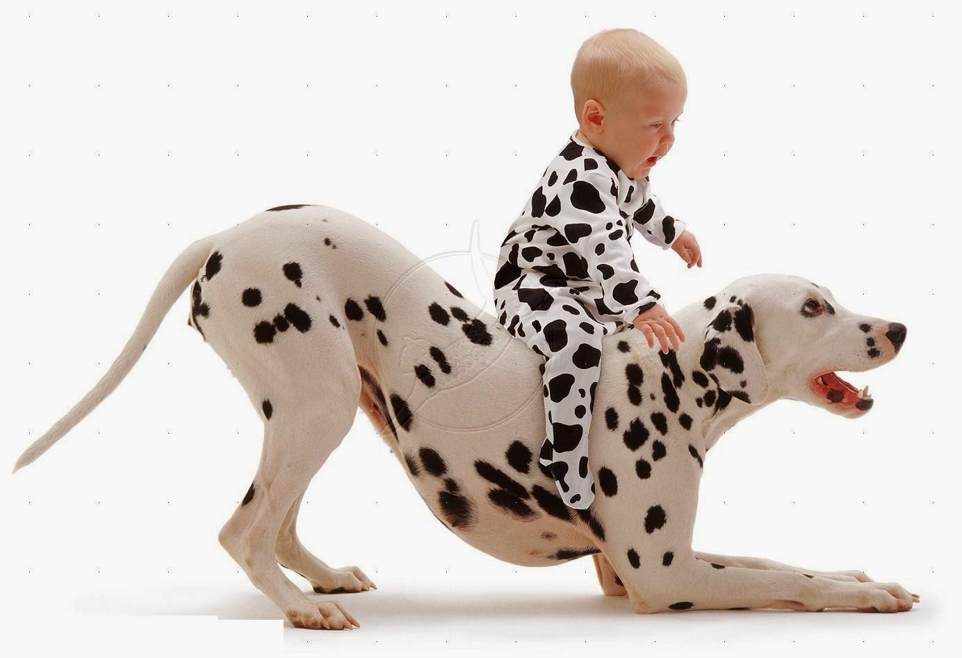 Why Do Dogs Like To Bark