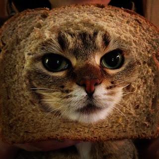 persian cat care diet