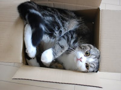Maru, Kucing Cute