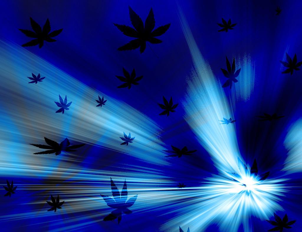 Flores   Fundo Azul