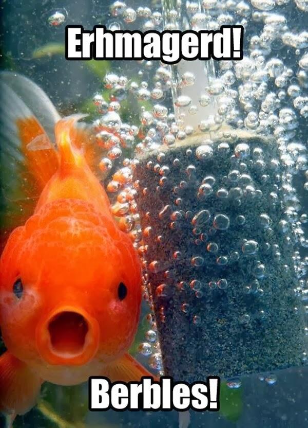 30 Funny animal captions - part 19 (30 pics), funny goldfish ith caption, fish meme, erhmagerd meme