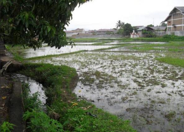 Harga tanah/sawah di daerah Balige Toba Samosir Sumatera Utara
