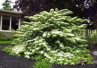 Arte y jardiner a dise o de jardines con arbustos for Jardines pequenos horizontales