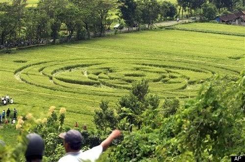 Benarkah Crop Circle Adalah Pola Ladang Yang Dibuat Alien dan UFO?