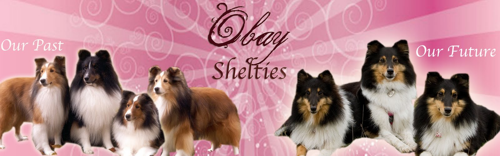 OBay Shelties
