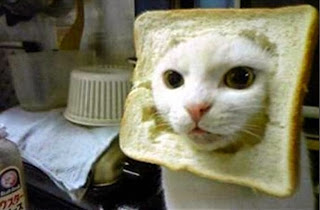 Inbred (in bread?) cat