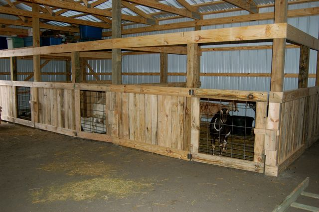 Good Goats New Stalls Amp Pregnant Bellies