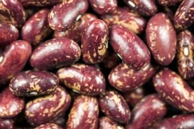 30 strains of heat-tolerant beans have the potential to survive and thrive with increasing temperatures. (Credit: Ervins Strauhmanis/Flickr) Click to Enlarge.