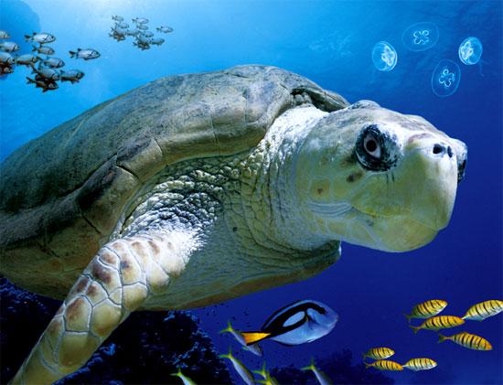 Tourism World: Sea Life London Aquarium