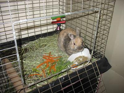 Baxter the bunny