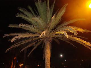 Palm tree iluminated at night - Sant Carles de La Rápita