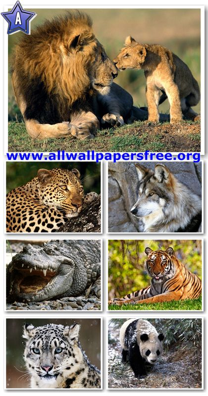 60 Amazing Animals Wallpapers 1280 X 1024 [Set 24]