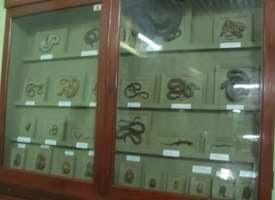 Reptil di Museum Bogor