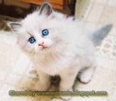 Unyunya Kucing Terlucu Di Dunia