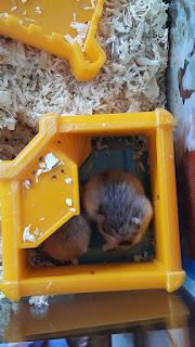 Hamsters sleep in the 3d printed castle
