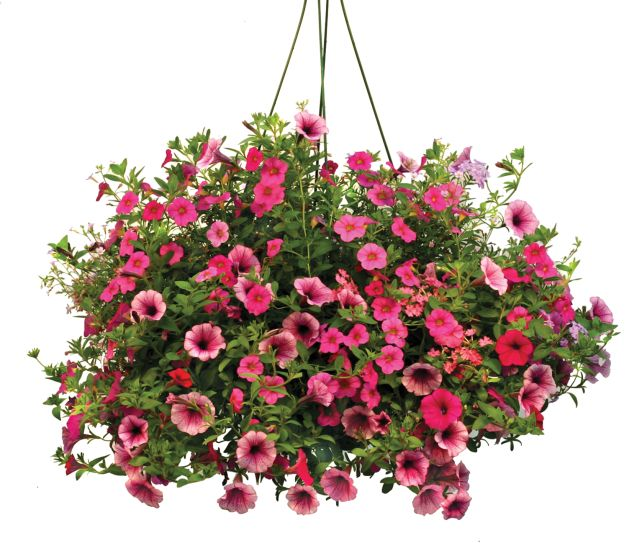 Artificial Flower Baskets Online : Helpful information tips discussion world
