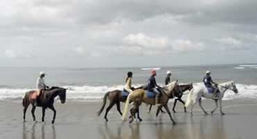 Bali Horse Riding and Jatiluwih Tour