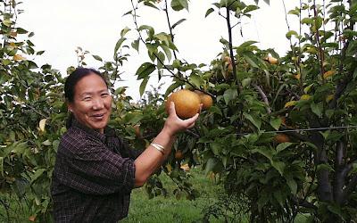 Asian pear soil ph