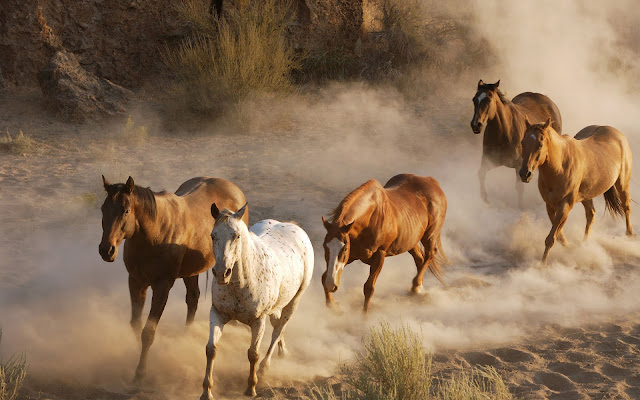 Fast running brown horses