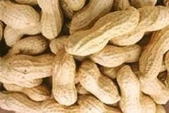 kacang tanah goreng