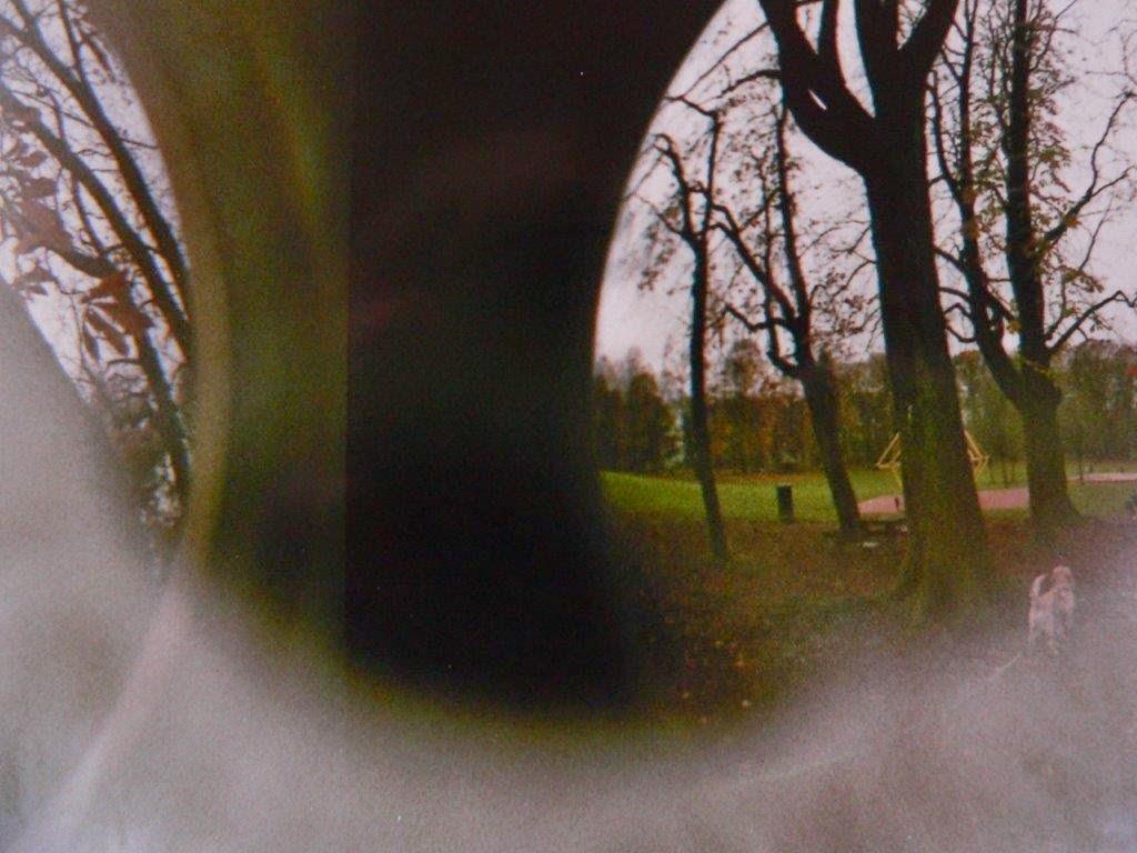 Bäume Analog Foto Hund