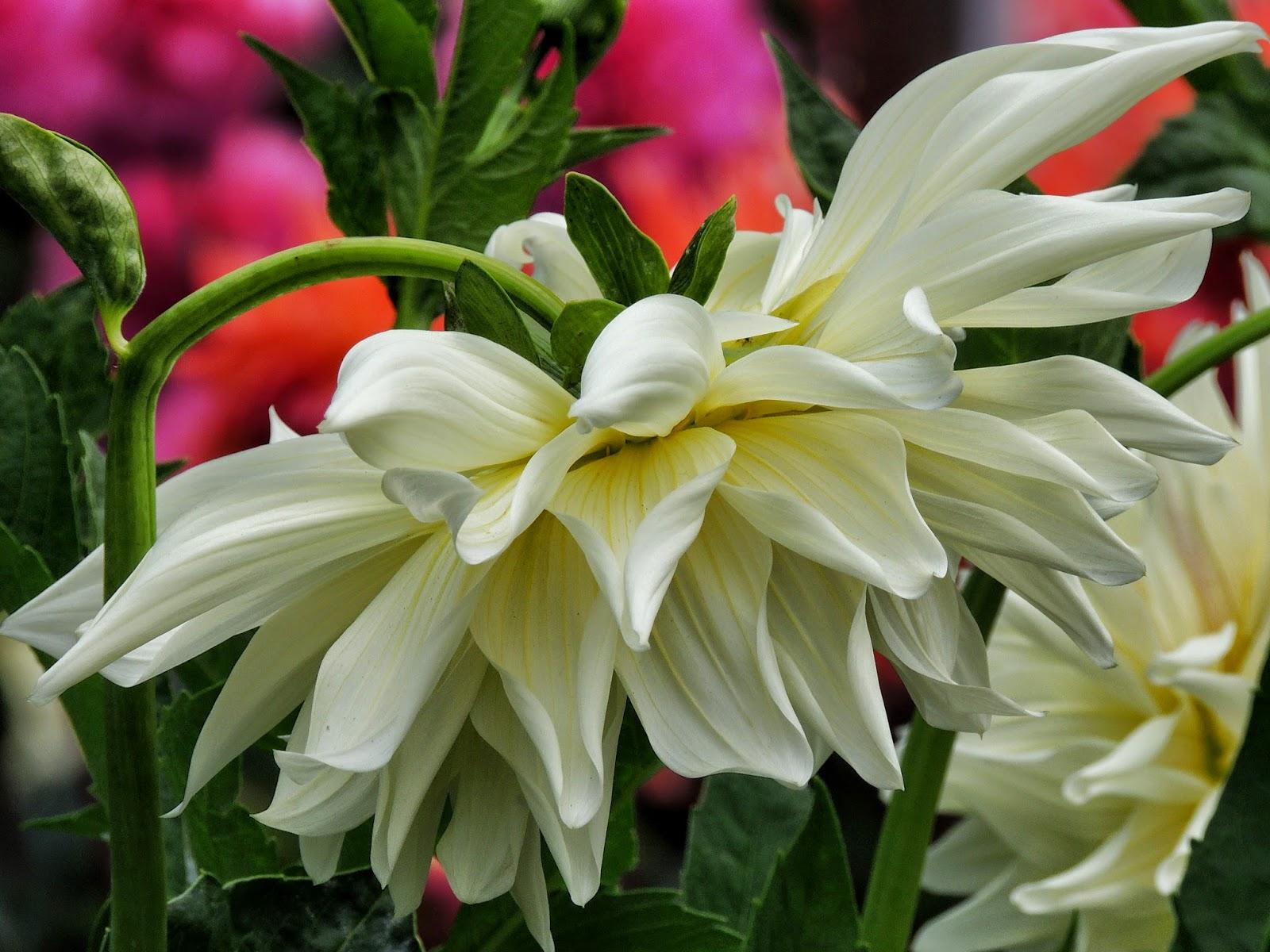 Princess haiku december 2014 a white flower perfection said princess haiku izmirmasajfo