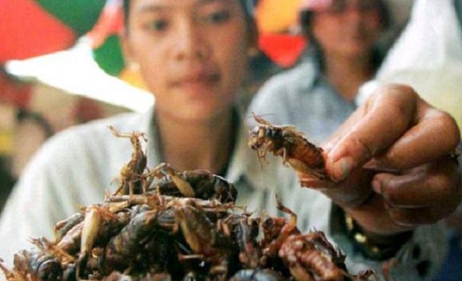 Amicomario nutrire il pianeta energie per la vita i for Cucinare meduse