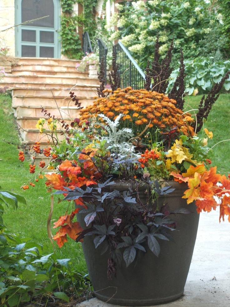 My Enchanting Cottage Garden: Mum's The Word For Fall