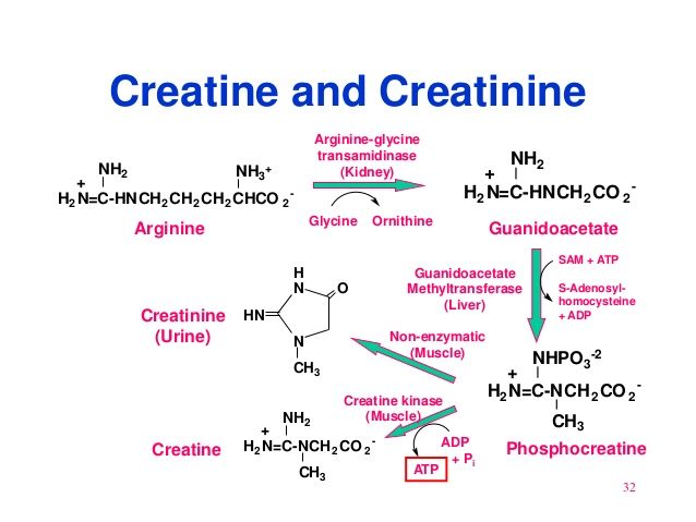 an analysis of the effects of creatine in people What are creatine side effects many people, particularly men, use supplements like creatine to help support and enhance their performance.